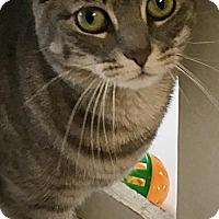 Adopt A Pet :: Luka - Manchester, MO