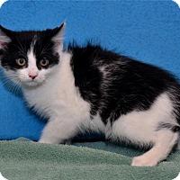 Adopt A Pet :: Feather - Lenexa, KS