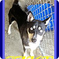 Adopt A Pet :: JAKE - Halifax, NS