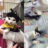 Adopt A Pet :: Tiny - Novato, CA