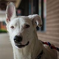Adopt A Pet :: Othello - Hillside, IL