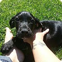 Adopt A Pet :: Tiny - South Jersey, NJ