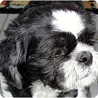 Adopt A Pet :: Lieutenant (Louie)-VA - Mays Landing, NJ