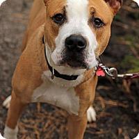 Adopt A Pet :: Baby Boy - Tinton Falls, NJ