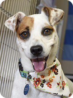 Terrier (Unknown Type, Small) Mix Dog for adoption in Knoxville, Tennessee - Coraline