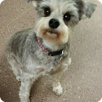 Adopt A Pet :: London - North Olmsted, OH