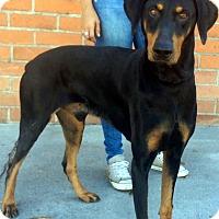Adopt A Pet :: INDIGO (video) - Los Angeles, CA