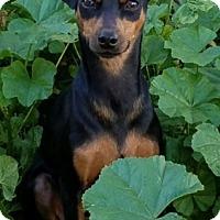 Adopt A Pet :: Sophie - Sacramento, CA
