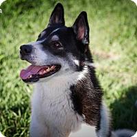 Adopt A Pet :: MILAN - BROOKSVILLE, FL