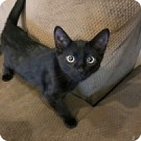 Adopt A Pet :: Absolem - McHenry, IL