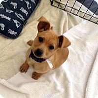 Adopt A Pet :: Clementine - Downey, CA