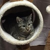 Adopt A Pet :: Lana - Salem, OH