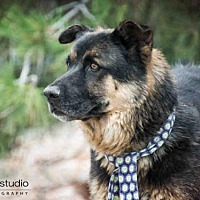 Adopt A Pet :: BLACKIE - Albuquerque, NM