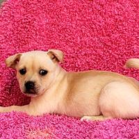 Adopt A Pet :: Mickey Mae - Los Angeles, CA