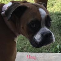 Adopt A Pet :: Missy Girl sg - Harrah, OK
