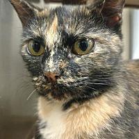 Adopt A Pet :: Sarah - Park Falls, WI