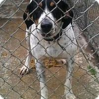 Adopt A Pet :: Kirk - Schererville, IN