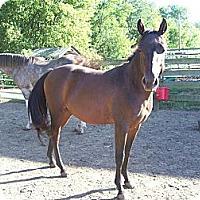 Adopt A Pet :: Rosie - Lyles, TN