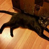 Adopt A Pet :: Claudius - Cherry Valley, CA
