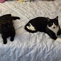 Adopt A Pet :: Tayson & Godiva - O'Fallon, MO