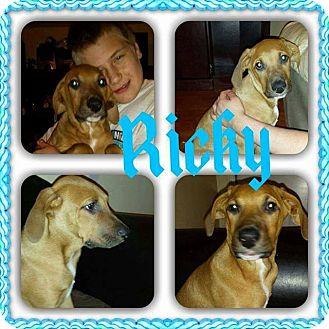 Weimaraner/Hound (Unknown Type) Mix Puppy for adoption in Sumter, South Carolina - Ricky