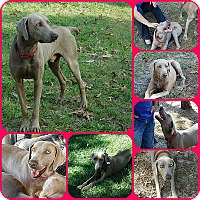 Adopt A Pet :: Rocky - Inverness, FL