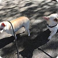 Adopt A Pet :: WOOFY - PT ORANGE, FL