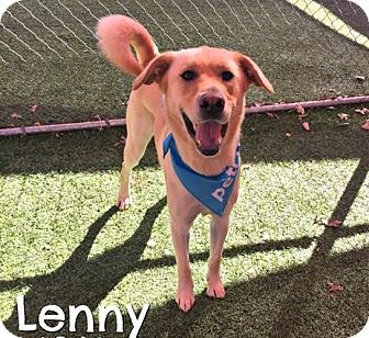 Labrador Retriever Mix Dog for adoption in Portland, Oregon - Lenny