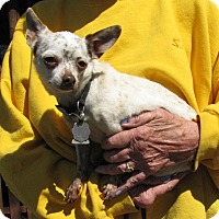 Adopt A Pet :: Crookie - Oakland, AR