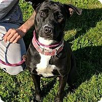 Adopt A Pet :: Luna - Lisbon, OH