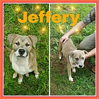 Adopt A Pet :: Jeffery - Madison, AL