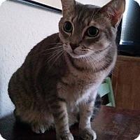 Adopt A Pet :: Payton - Seminole, FL