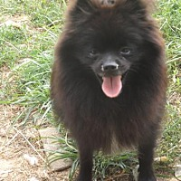 Adopt A Pet :: Precious - Zaleski, OH