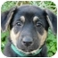 Photo 2 - German Shepherd Dog Puppy for adoption in Los Angeles, California - Penny  von Broudy