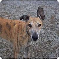 Adopt A Pet :: Bob2 - Roanoke, VA