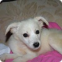 Adopt A Pet :: Nala - Westfield, IN