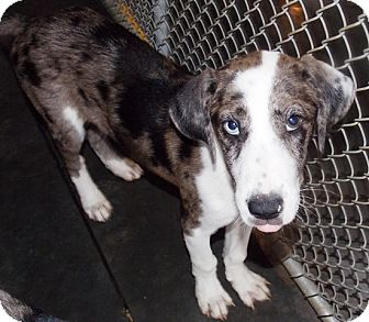 Hound (Unknown Type) Mix Dog for adoption in St. Pauls, North Carolina - Ty