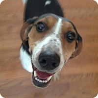 Adopt A Pet :: Ruthie*ADOPTED* - Chicago, IL