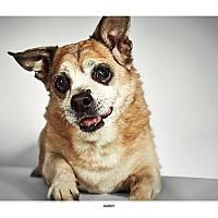 Adopt A Pet :: Harry - New York, NY