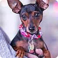 Adopt A Pet :: Eva - Syracuse, NY