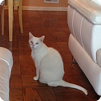 Adopt A Pet :: Pinky: Urgent - Piscataway, NJ