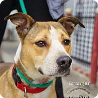 Adopt A Pet :: Ranger - Burbank, CA