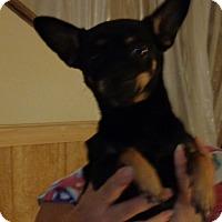 Adopt A Pet :: Lu Lu - Crump, TN
