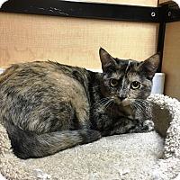 Adopt A Pet :: Lulu - Riverside, CA
