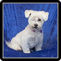 Adopt A Pet :: Daisy - San Diego, CA