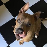 Adopt A Pet :: Hercules - Texas - Fulton, MO