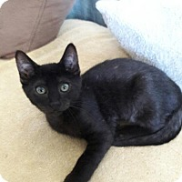 Adopt A Pet :: Lazarus - Richmond, CA