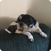 Adopt A Pet :: Reagon - Hampton, VA
