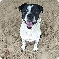 Adopt A Pet :: Hawkeye - Melrose, FL