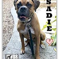Adopt A Pet :: Sadie 2017-2 - Woodinville, WA
